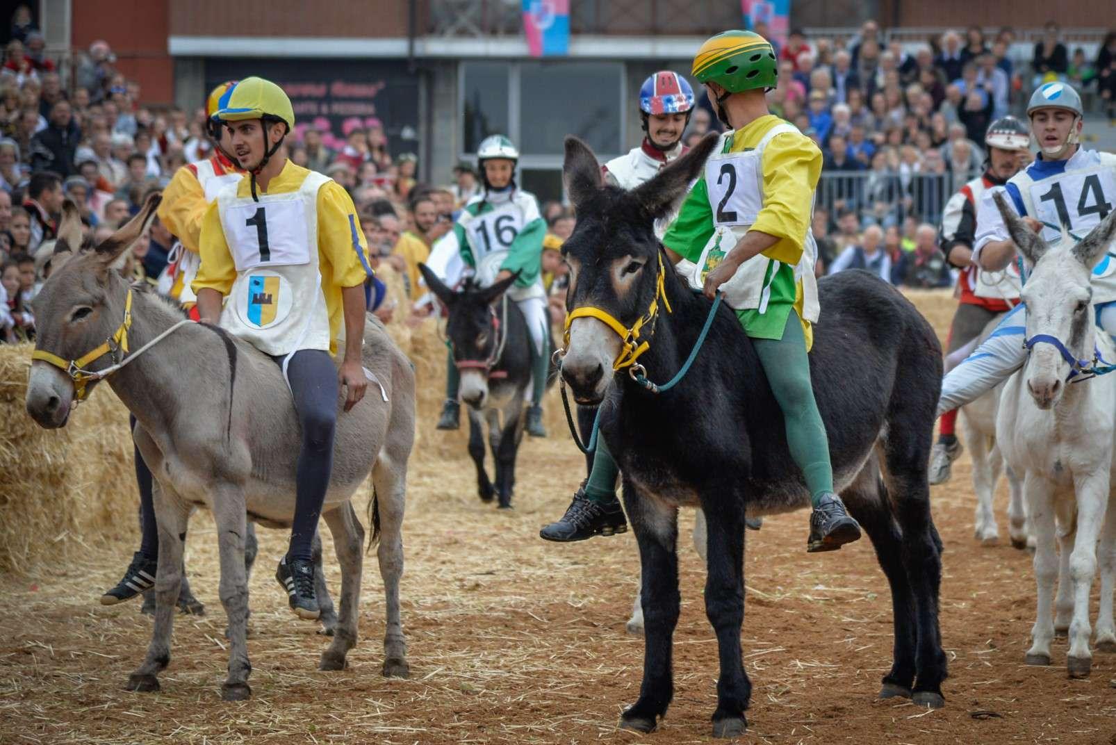 Fiera Internazionale del Tartufo Bianco d'Alba donkey race start